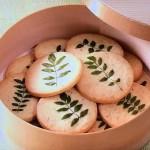 山椒(さんしょう)サブレ・桜のサブレレシピ!NHKきょうの料理は小林かなえの人気春のスイーツ